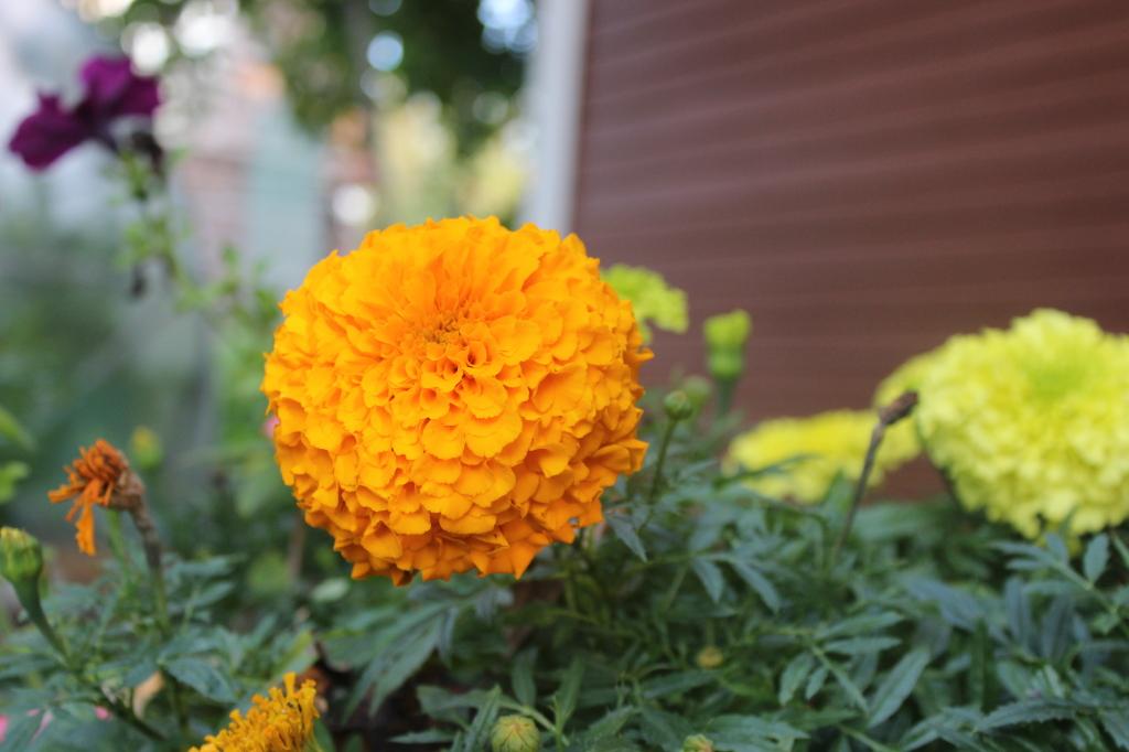 цветы-6