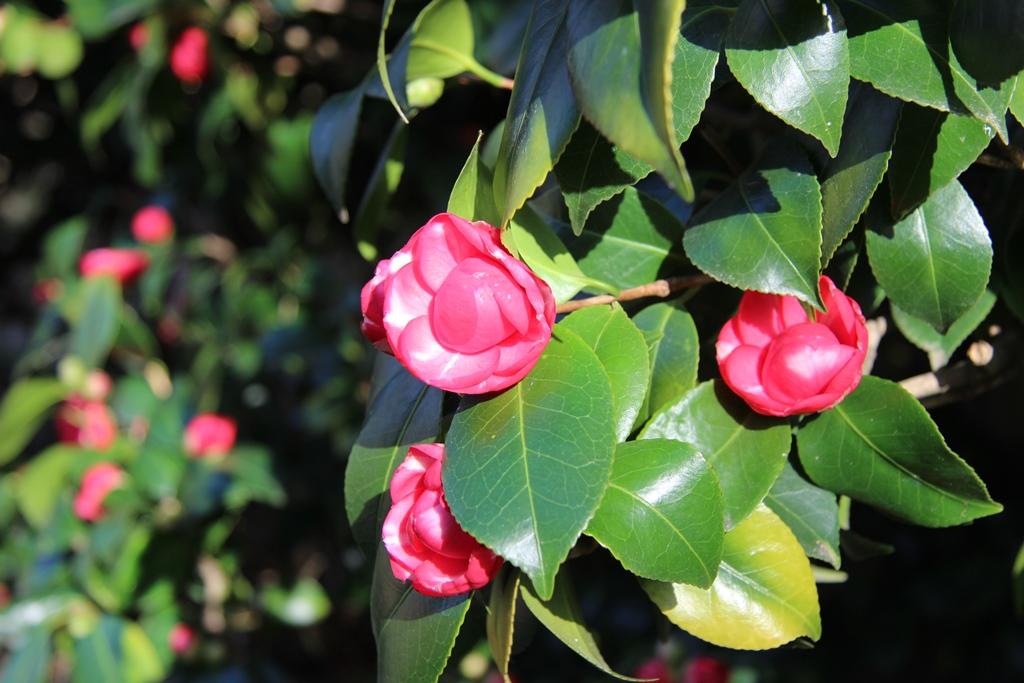 дендрарий цветы 5