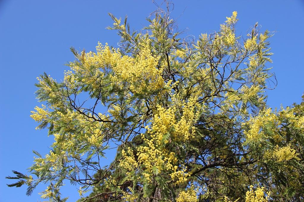 дендрарий цветы